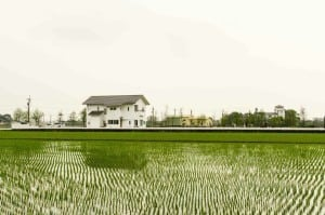 Rice Field in Hualian, Taiwan