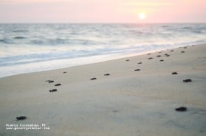 Releasing baby turtles into the sunset, Puerto Escondido, Mexico